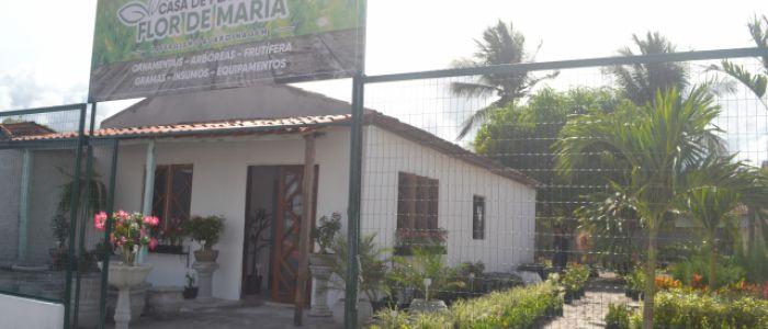 """Casa de Plantas """"Flor de Maria"""" chega a Penedo para dar mais charme ao seu jardim"""
