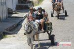 Cavalgada Tamo Junto arrasta multidão de cavaleiros e amazonas pelas principais ruas de Penedo